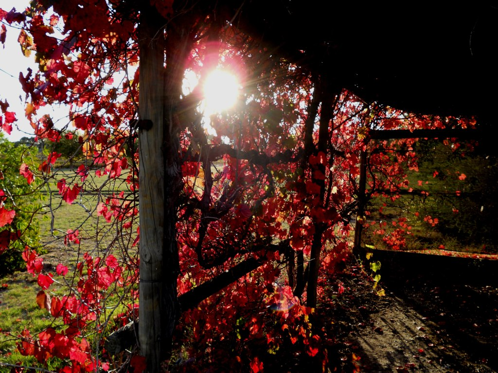 clare valley tours autumn
