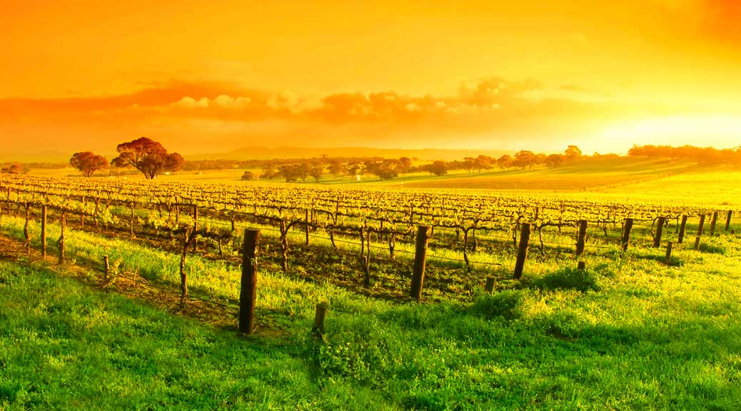 Clare gourmet experience - Clare valley vineyards